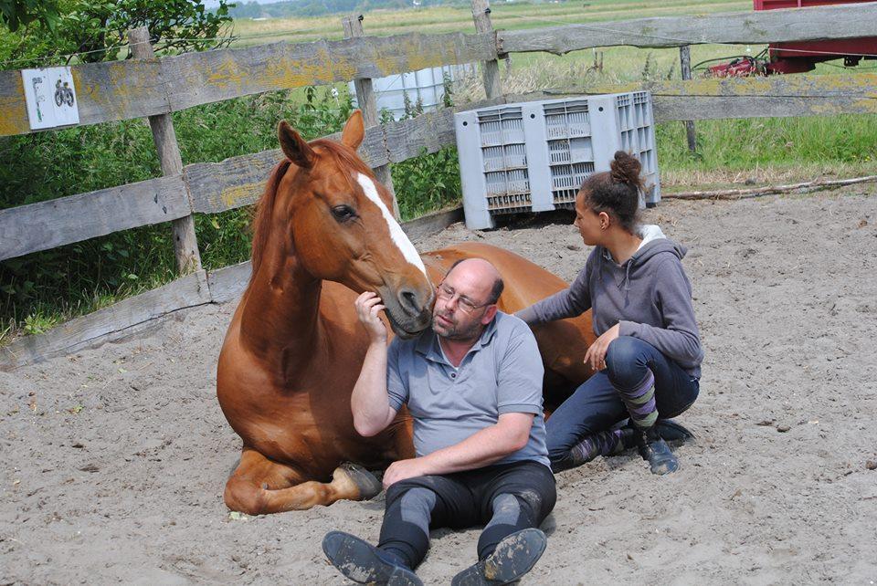 Werken Verstandelijke Handicap Klompenhoeve Paard Paarden Paardrijden